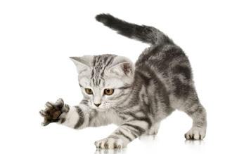 higiene-gatos-0