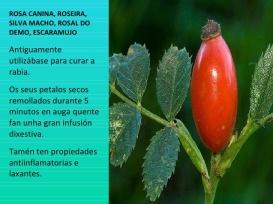 herbas-medicinais-9-728