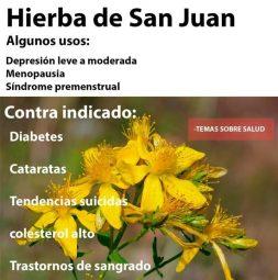 Hierba-de-San-juan-contra-indicaciones