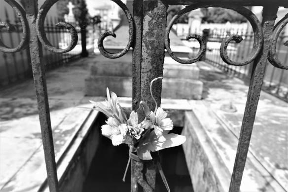 Flores-secas-cementerio-de-La-Carriona-Avilés